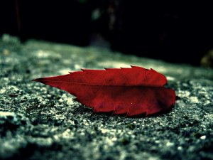autumn_leaf_by_theAgonoize