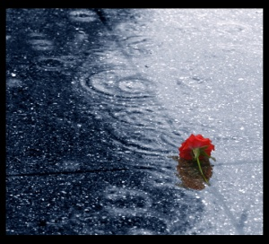Dropped_in_the_rain_by_humminggirl